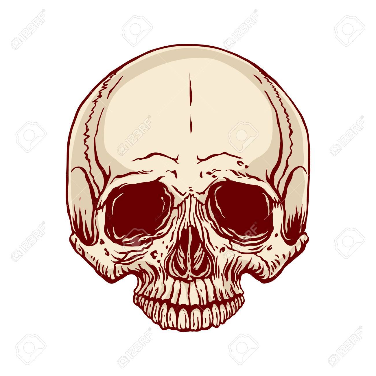 Hand Drawn Illustration Of Anatomy Human Skull Without A Lower
