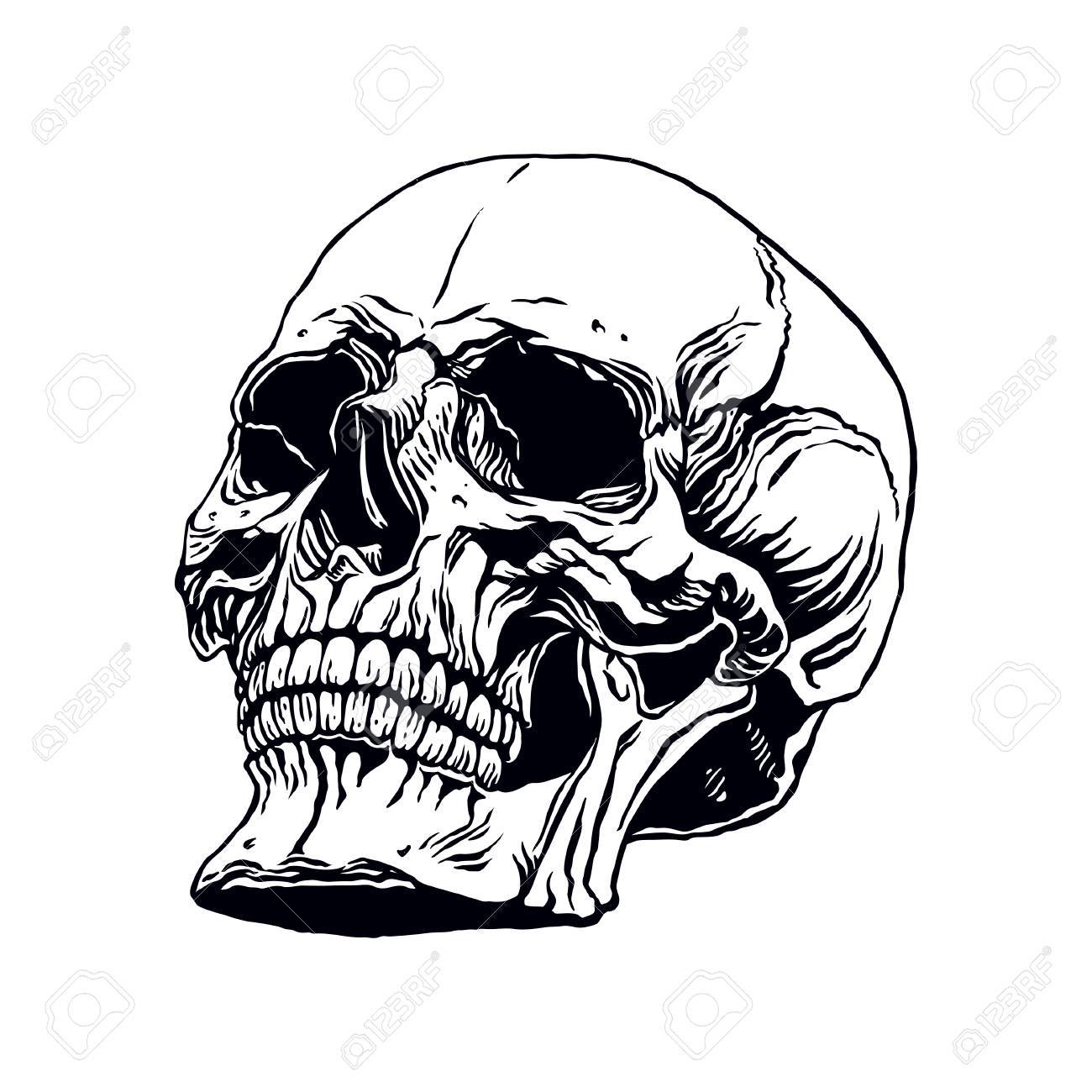 Hand Drawn Illustration Of Anatomy Human Skull With A Lower Jaw