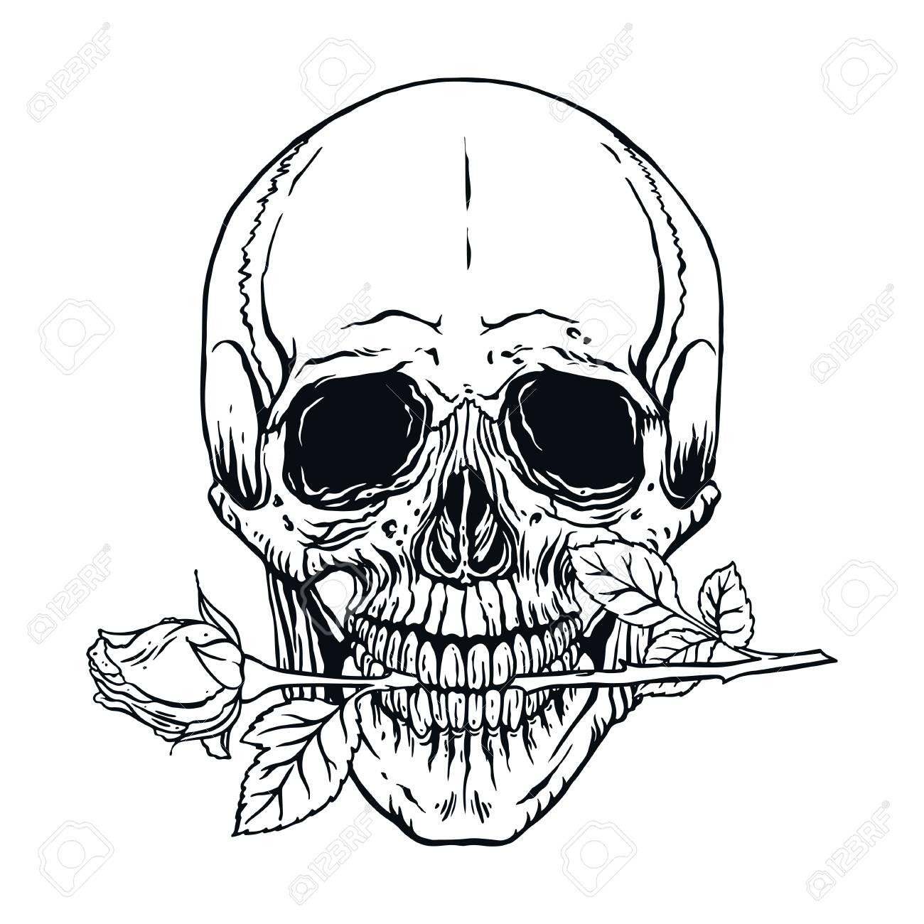 Hand Gezeichnete Illustration Des Menschlichen Schädels Der Anatomie ...