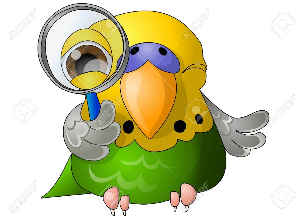 green budgerigar with magnifying glass Stock Photo - 9842809