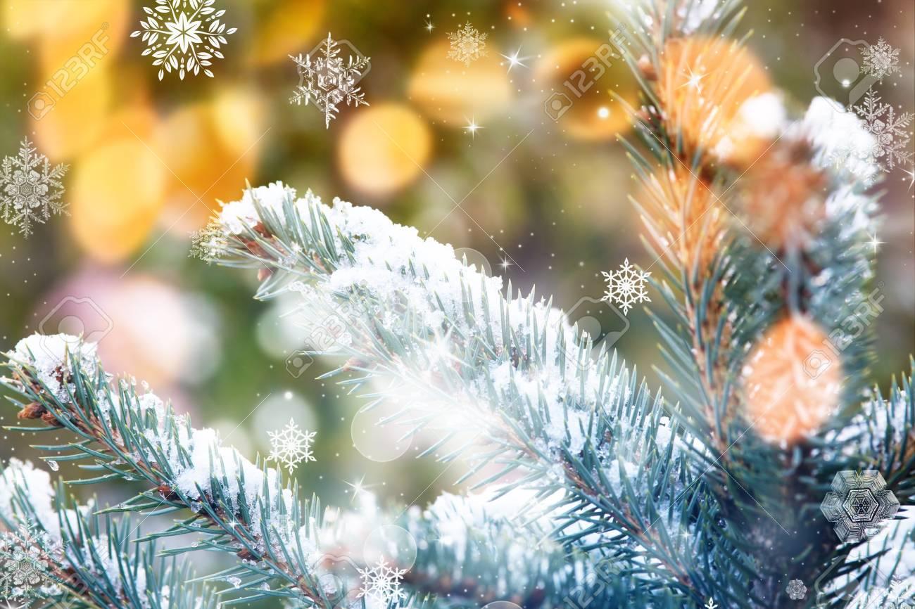 Branches De Sapin Enneigé à Noël