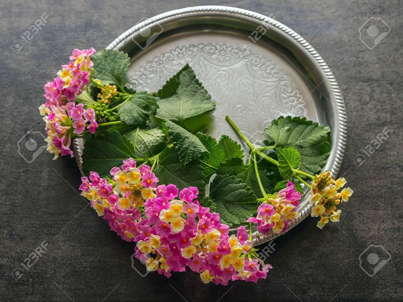 Hermoso Ramo De Flores Brillantes Lantana Pequeas Flores