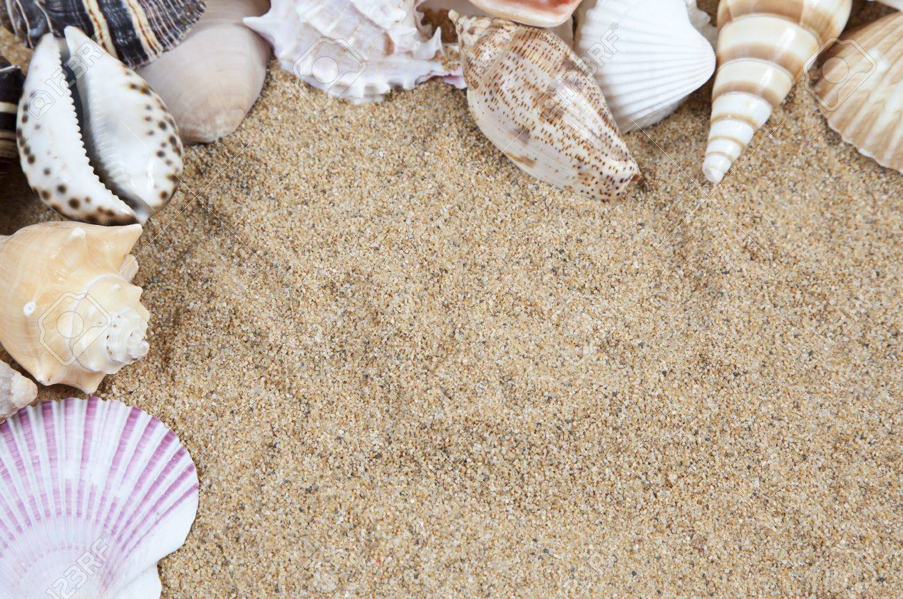nice sea shells on the sandy beach taken closeup shell border or frame stock photo