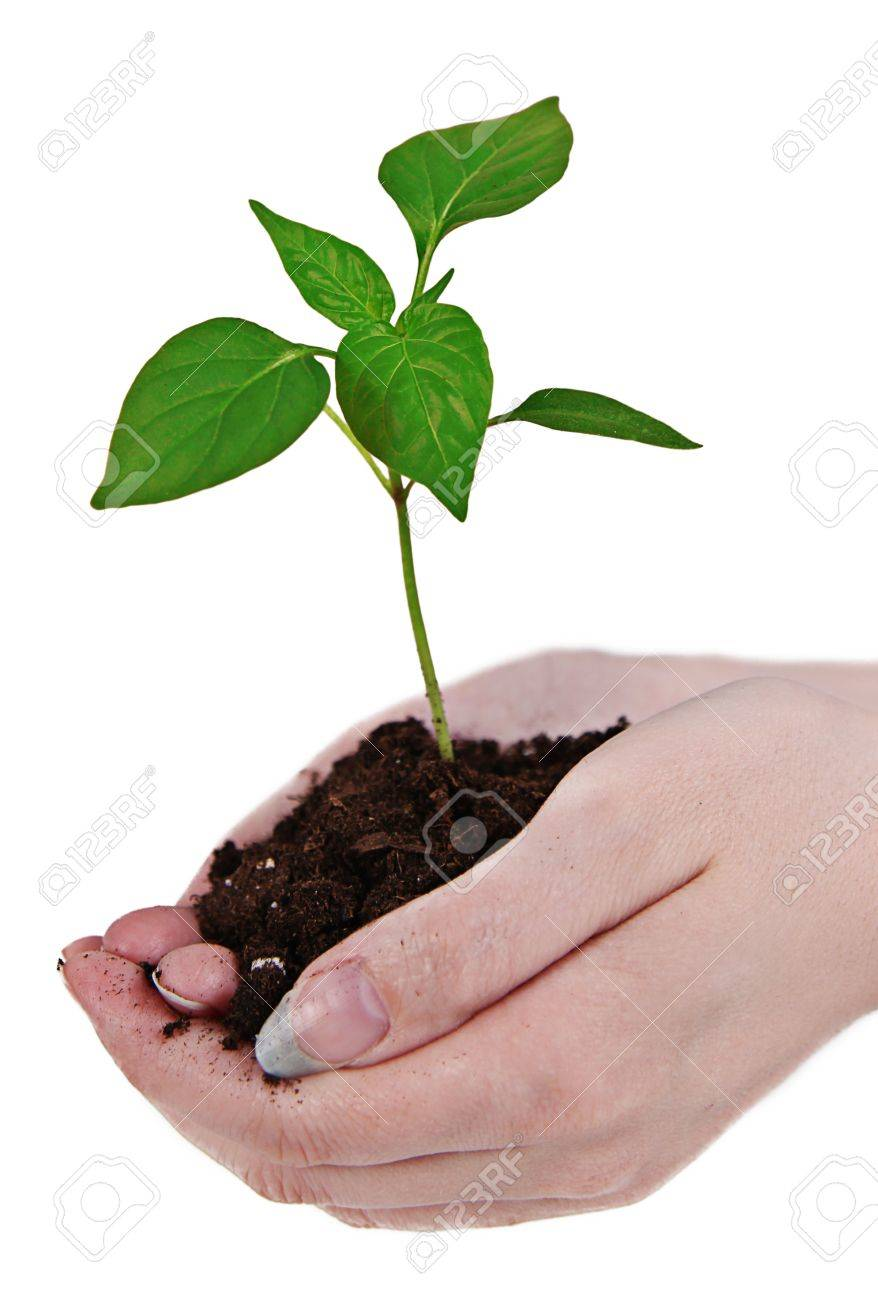 Small Little Plant In Woman's Hand Stock Photo, Picture And Royalty Free  Image. Image 9540846.