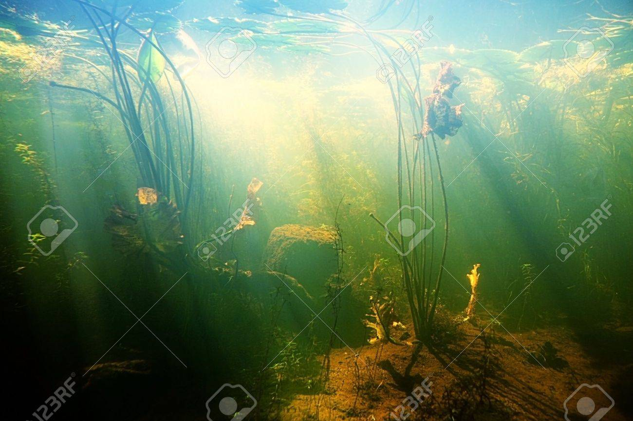 Beautiful Underwater view of a pond in summer - 11981111