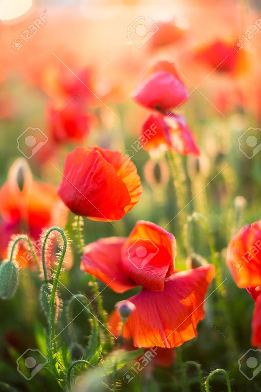 Nature Spring Summer Blooming Flowers Concept Close Up On