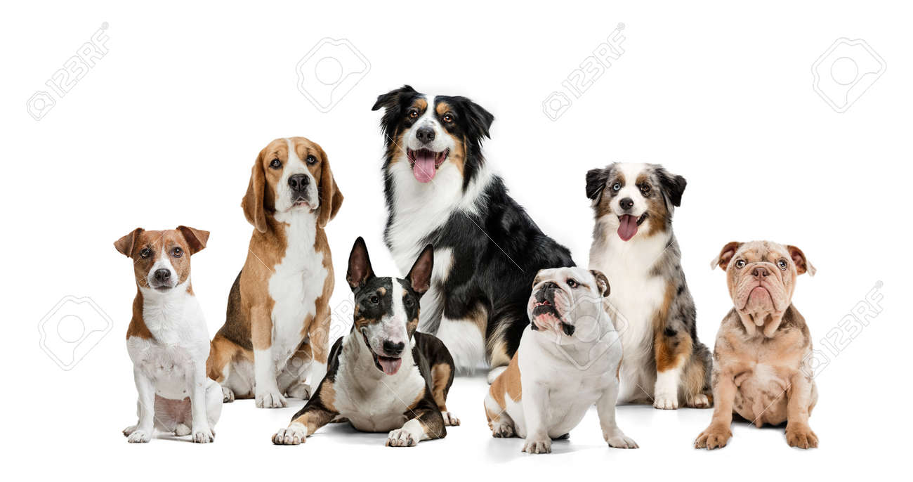 Art collage made of funny dogs different breeds posing isolated over white studio background. - 168944540