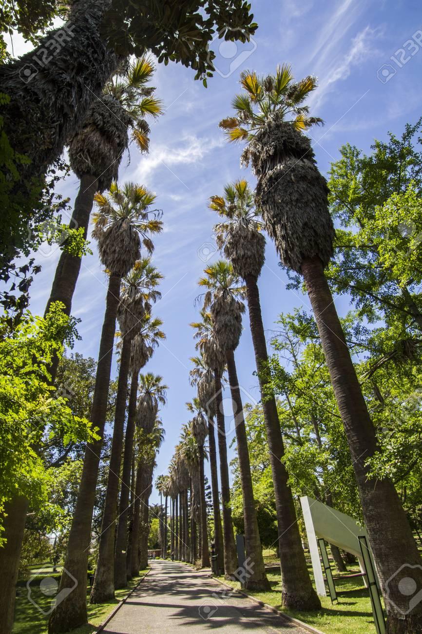 Vue D Un Chemin Avec De Hauts Palmiers Situes Dans Le Jardin