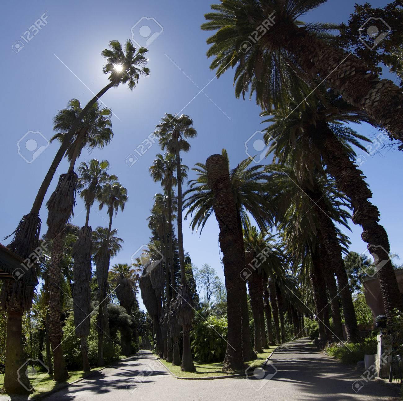 Vue D Un Sentier Avec De Grands Arbres De Palmiers Situes Dans Le