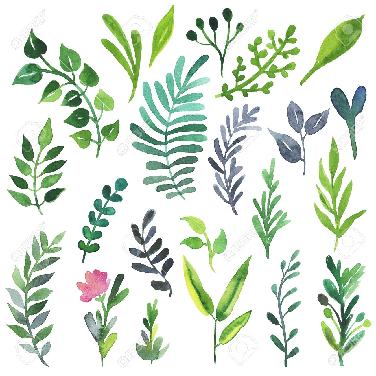 Hand Painted Watercolor Plants And Flowers Vintage Illustrations Stock Photo Picture And Royalty Free Image Image 58219303