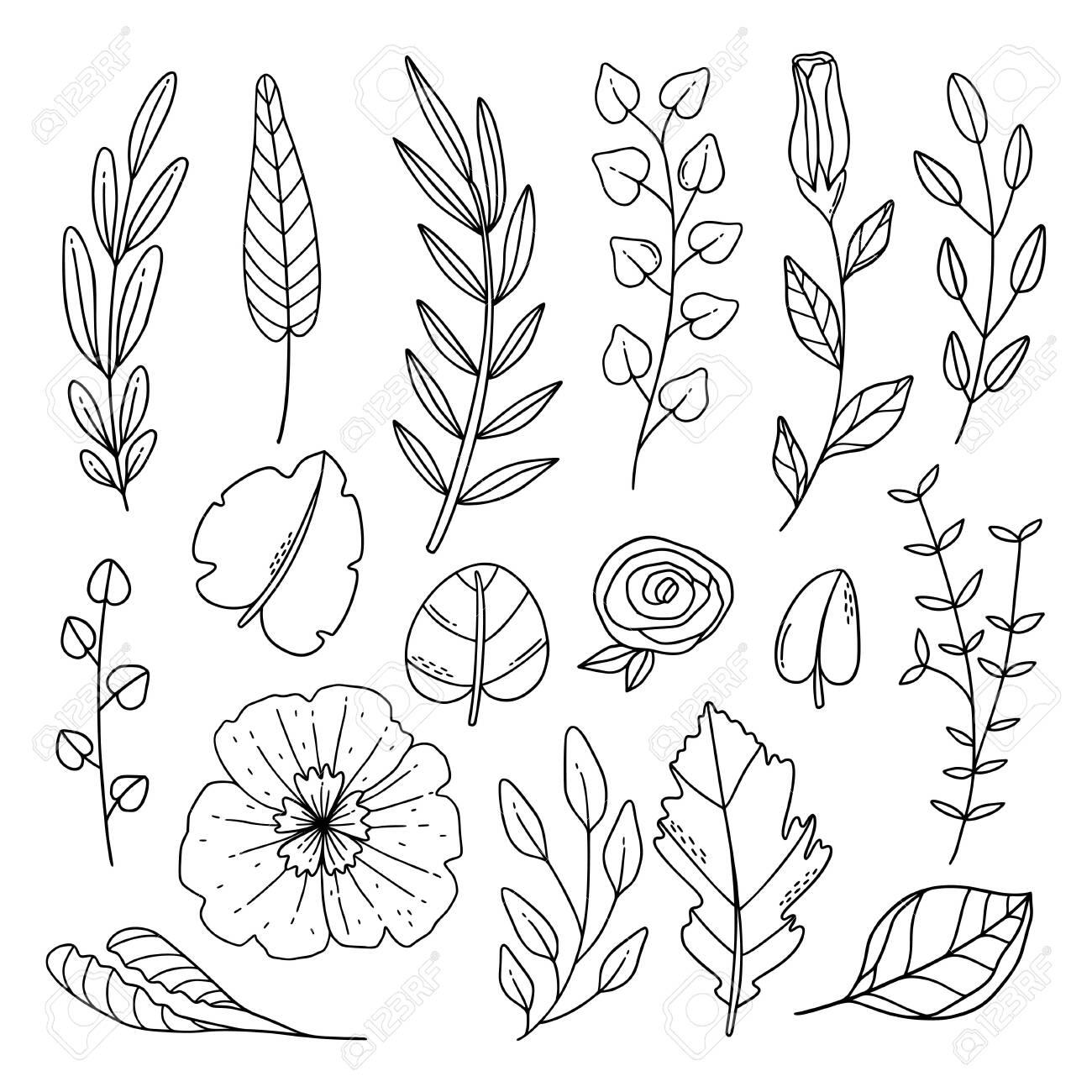 Hand Drawn Line Art Foliage And Flower Collection Lizenzfrei Nutzbare Vektorgrafiken Clip Arts Illustrationen Image 151974199