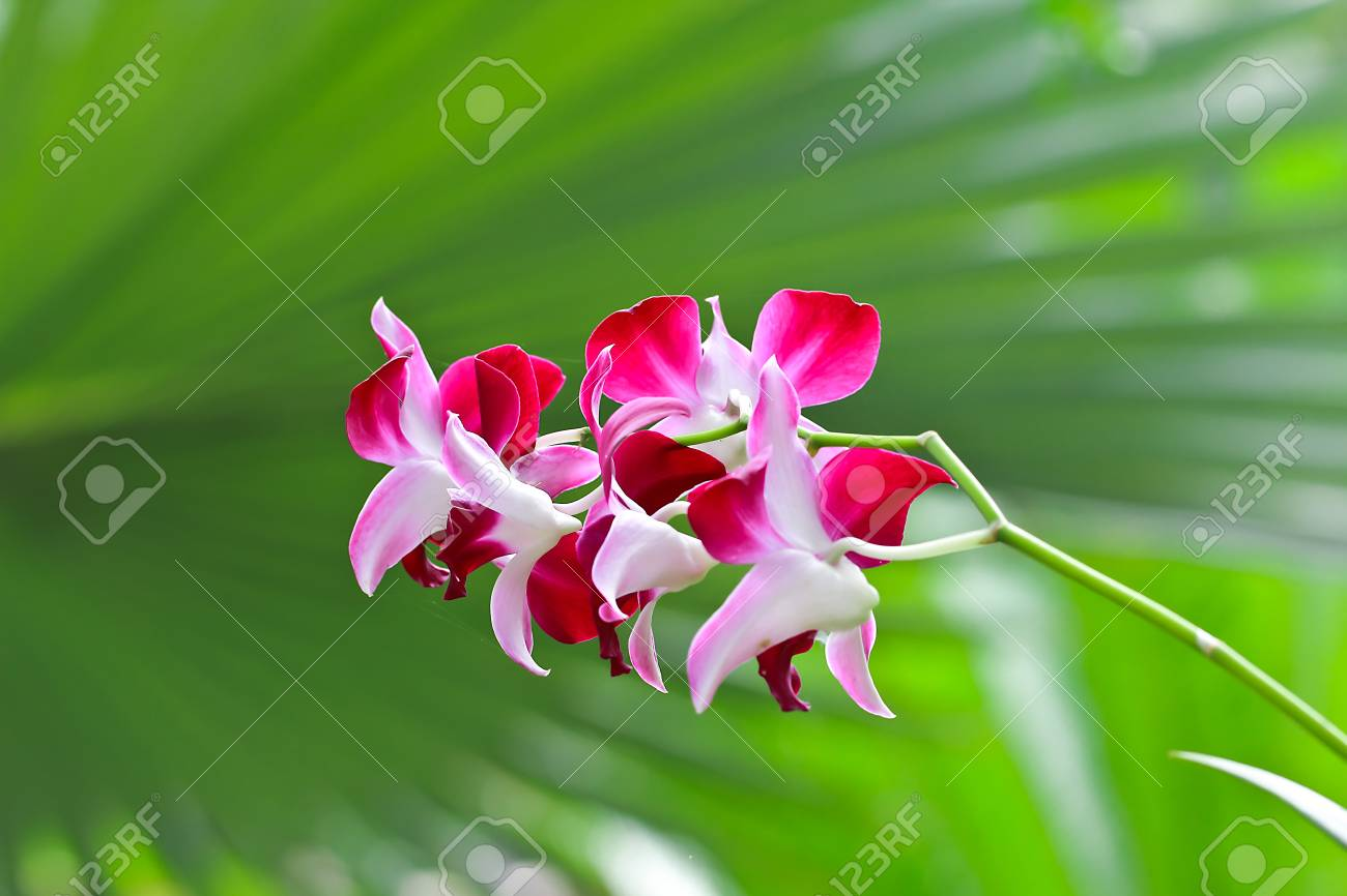 Beautiful purple orchid on green leaf background,back side Stock Photo - 14844179