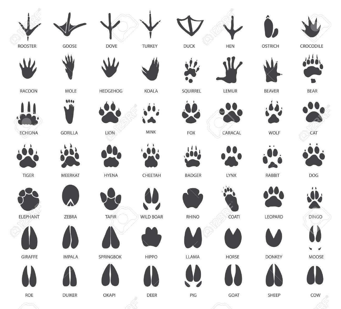 Vector set of animal tracks - 52741382
