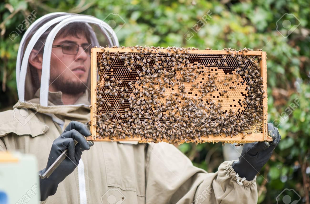 Imker Halten Wabenrahmen Mit Bienen Für Die Inspektion Lizenzfreie ...