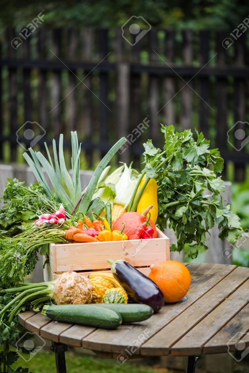 Autumn Garden Harvest Vegetables In Wooden Crate On Garden Table