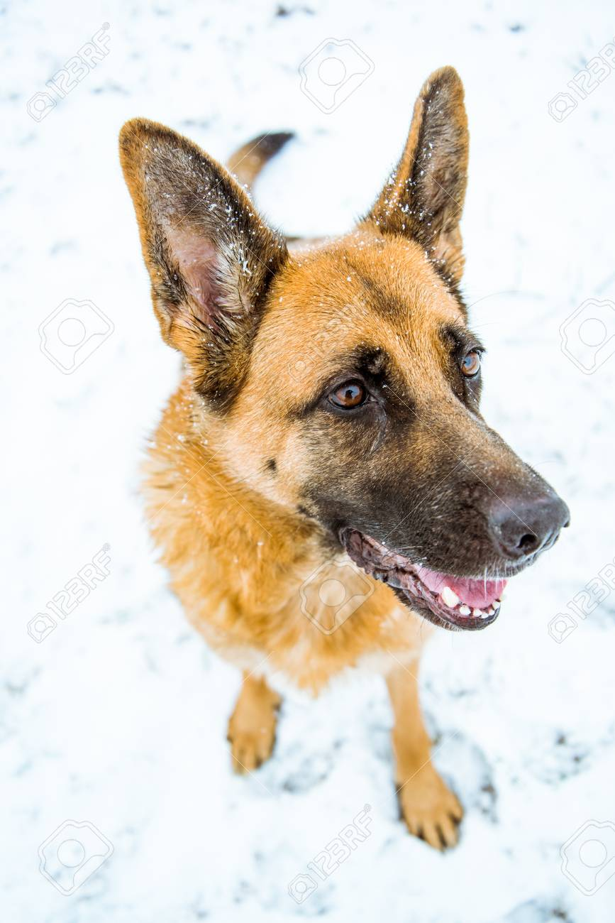 Happy Dog Possing Funny Face With Smile Stock Photo Picture And