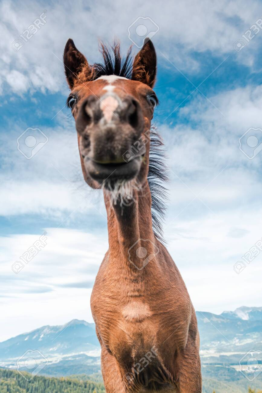 Funny Face Horse Head Portrait Unique Perspective Stock Photo Picture And Royalty Free Image Image 133883609