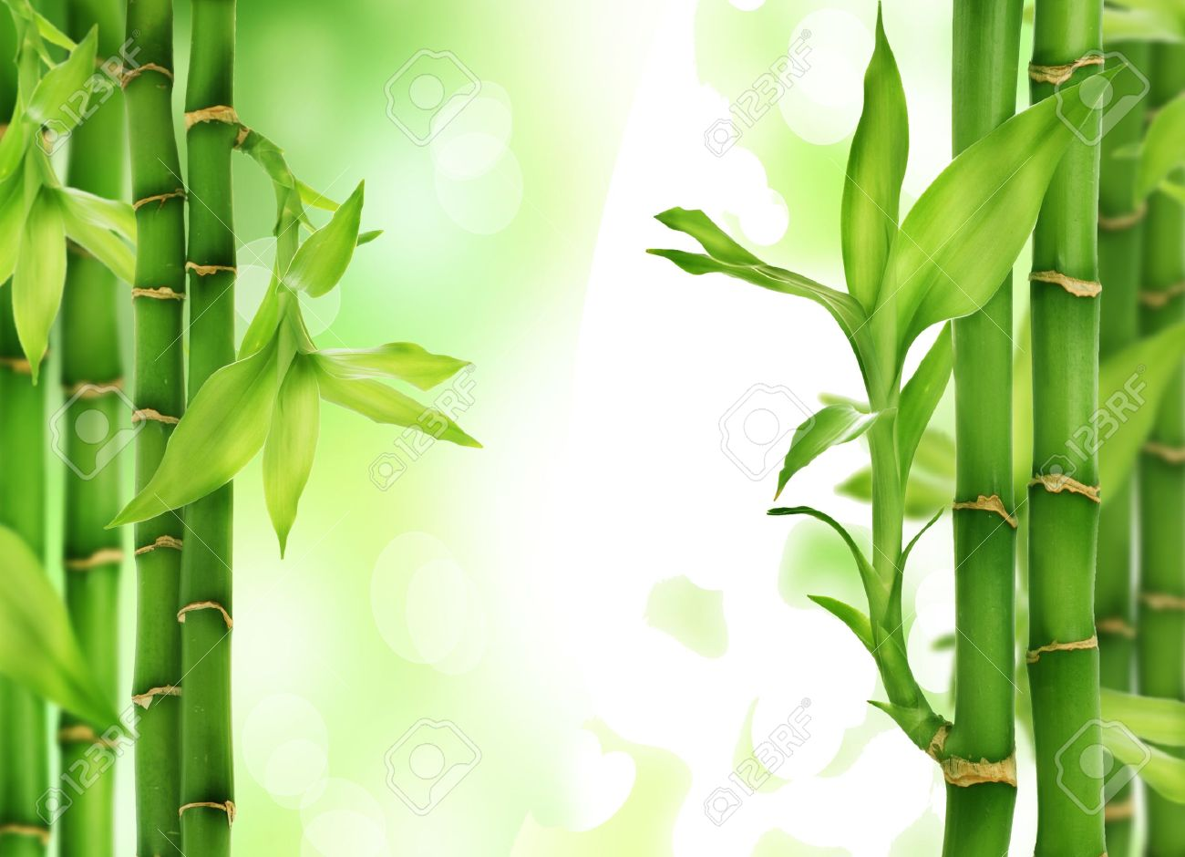 01bf3f5c3594 Fresh beautiful Bamboo Border isolated on white background Stock Photo -  17170944