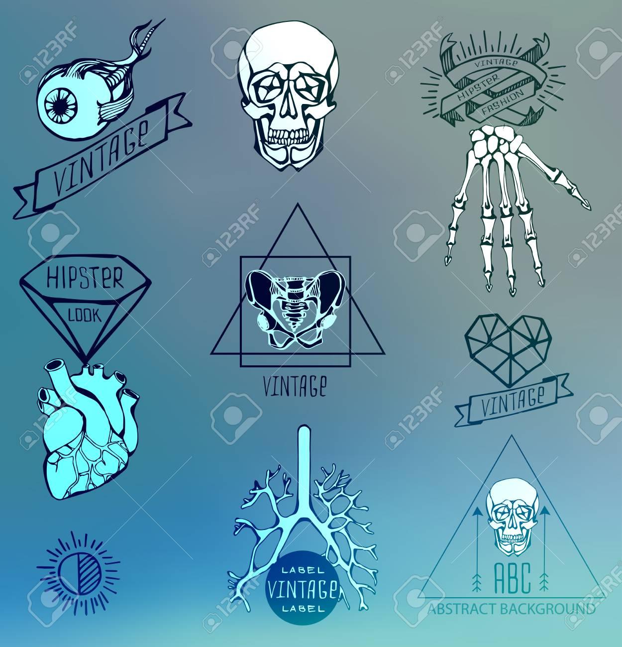 Conjunto De Etiquetas Con Esqueleto Humano Y La Anatomía ...