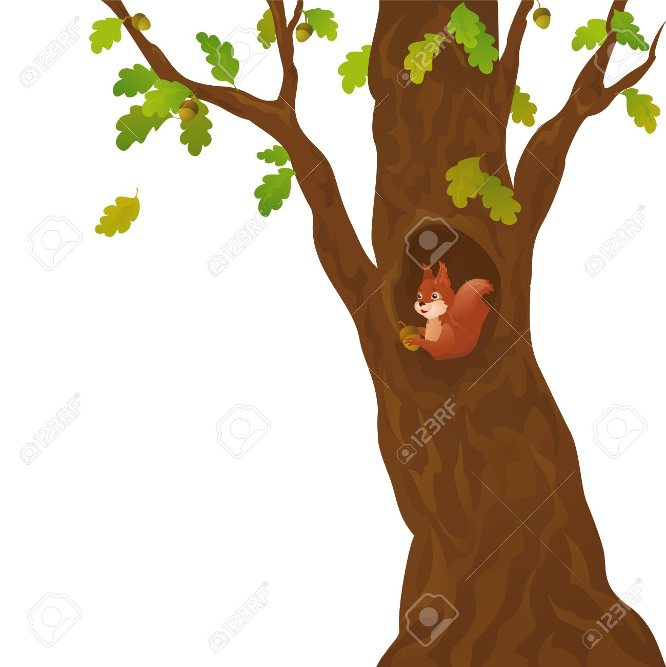 Vector illustration of a curious squirrel in the oak, isolated on white Stock Vector - 20108532