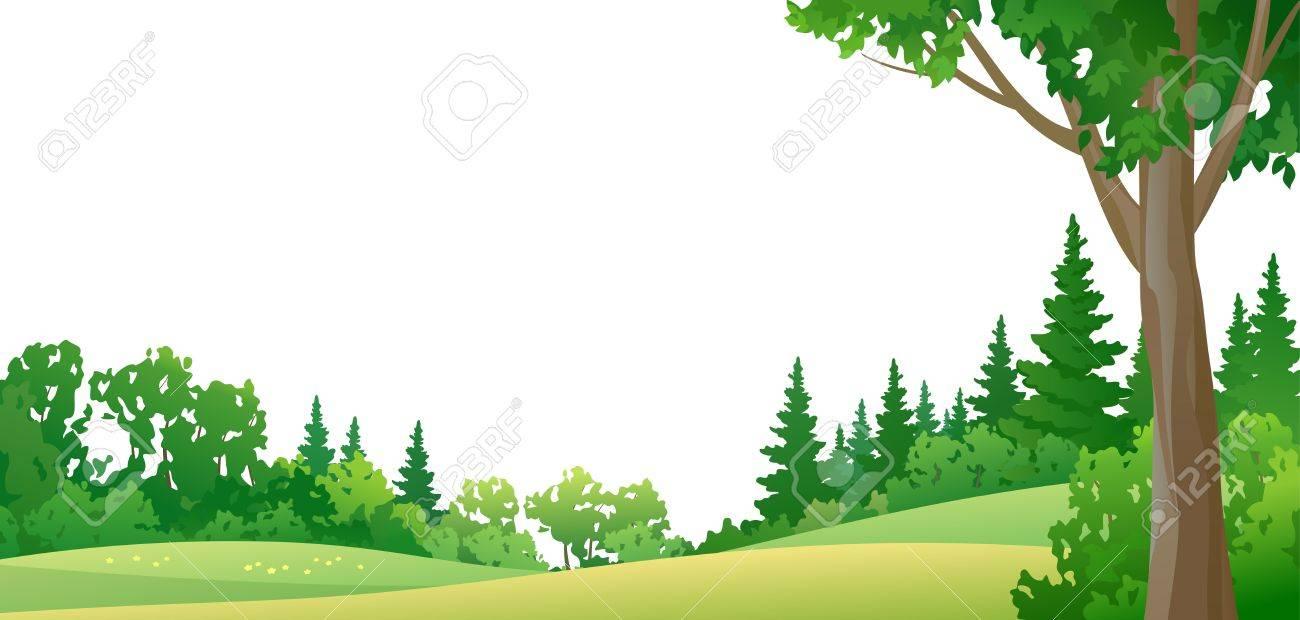 白い背景の上の夏の森のベクトル イラスト ロイヤリティフリークリップ