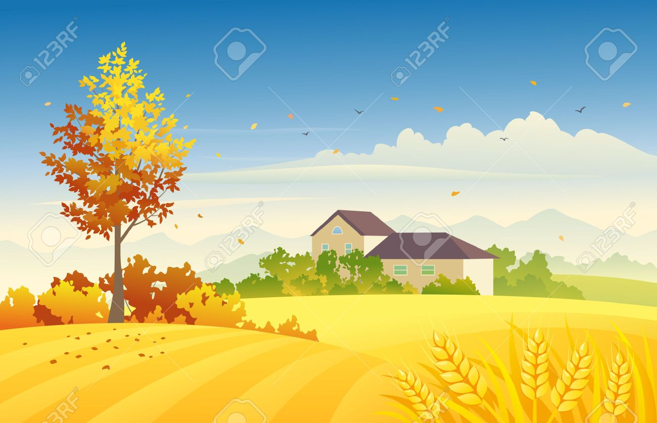 illustration of an autumn farm scene with wheat fields and bright foliage tree - 43941068