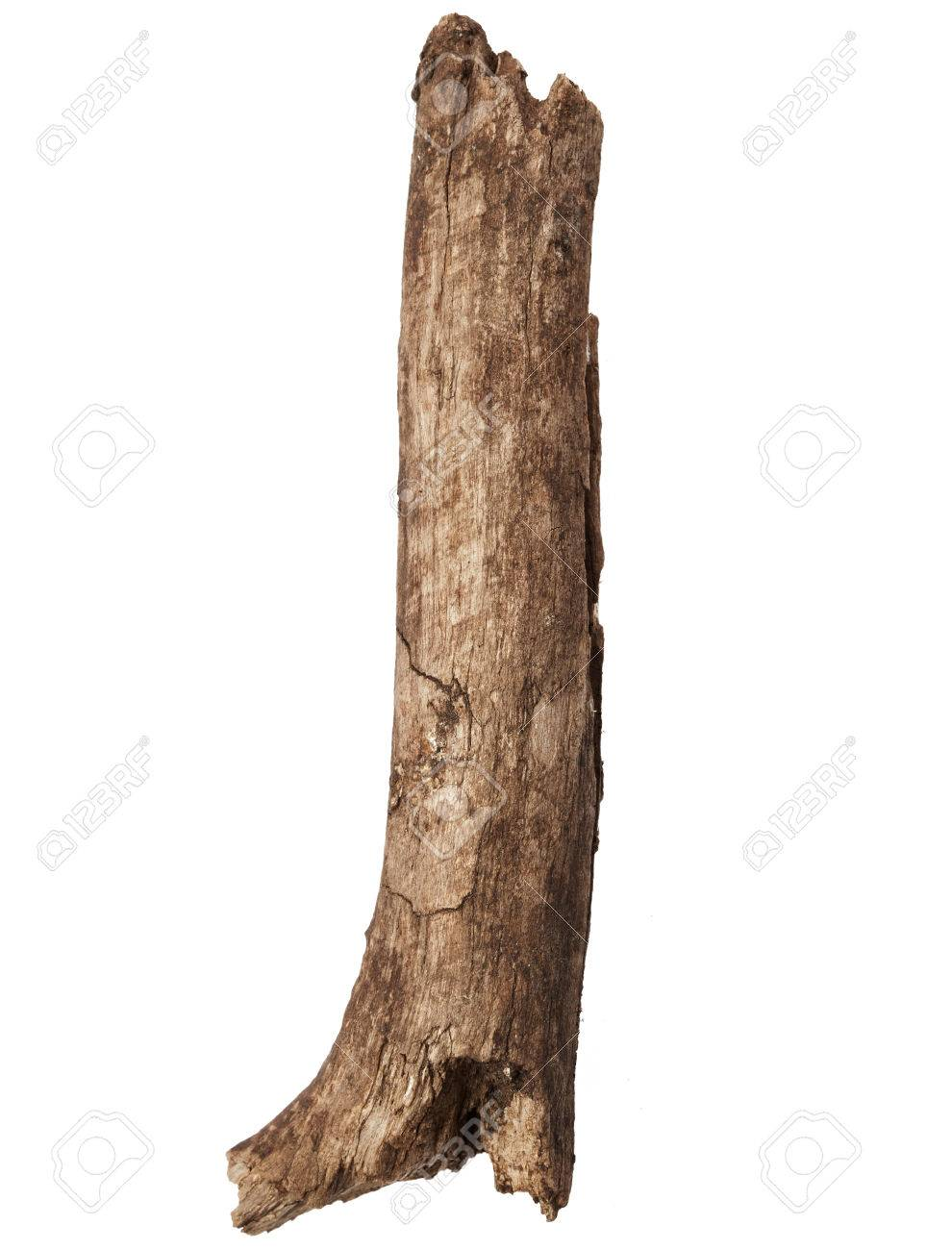 Part of tree trunk isolated on white background - 44241389