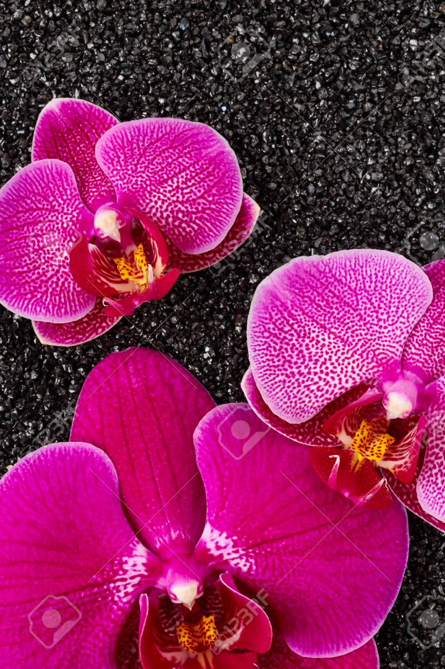 Flores De Orquideas Moradas En Piedras Negras Fotos Retratos