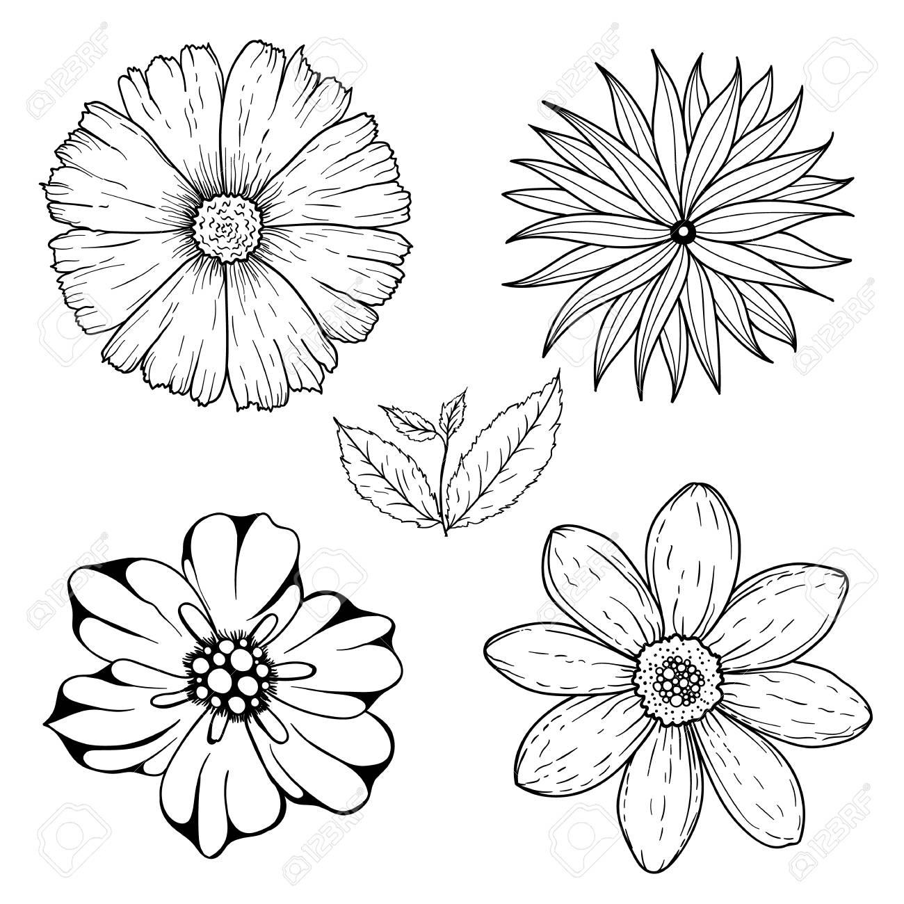 Vector Conjunto De Flores Sin Color Dibujado A Mano Y La Rama De La ...