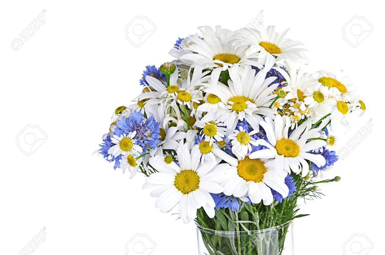 Beautiful bouquet of daisies in vase stock photo picture and beautiful bouquet of daisies in vase stock photo 23527060 reviewsmspy