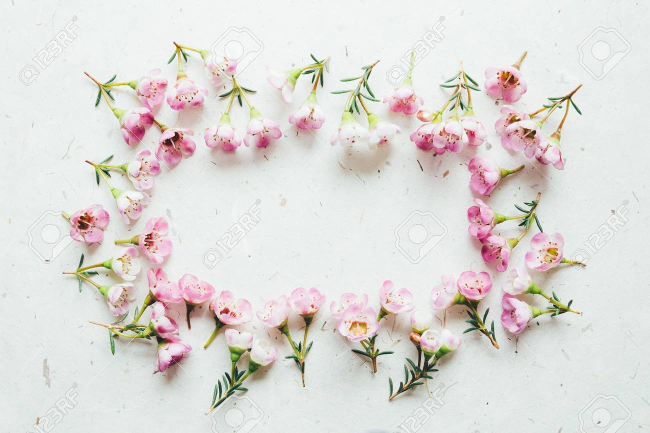 Pink waxflowers frame stock photo picture and royalty free image pink waxflowers frame stock photo 76650046 mightylinksfo