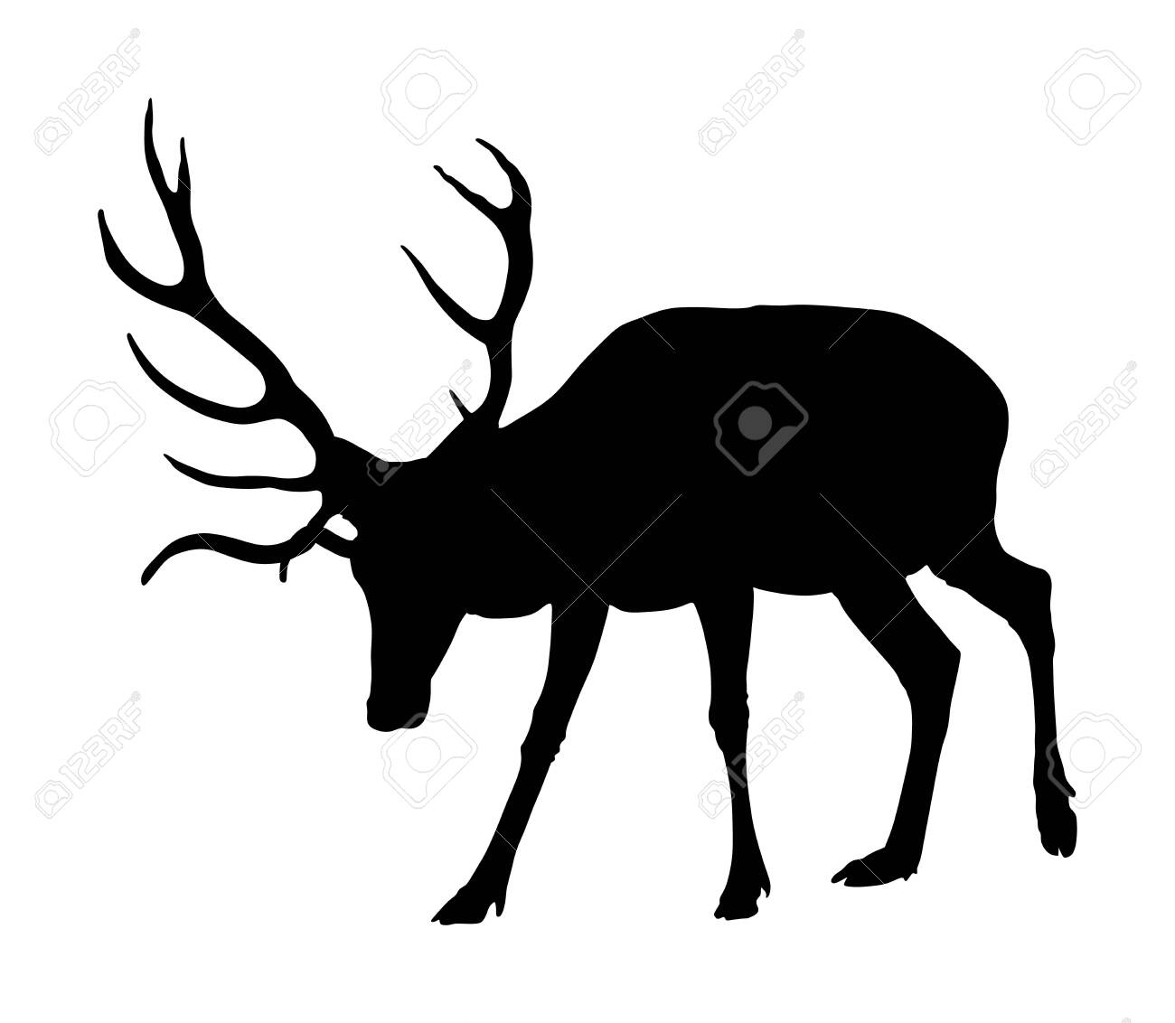 Deer vector silhouette isolated on white background. Reindeer, proud Noble Deer male in forest or zoo. Powerful buck with huge neck and antlers standing. Red deer grazing grass. - 141460097