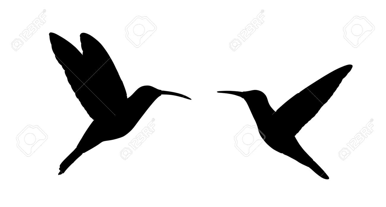Couple in love hummingbird vector silhouette illustration isolated on white background. Tropical little bird colibri symbol.Smallest bird family. - 173166794