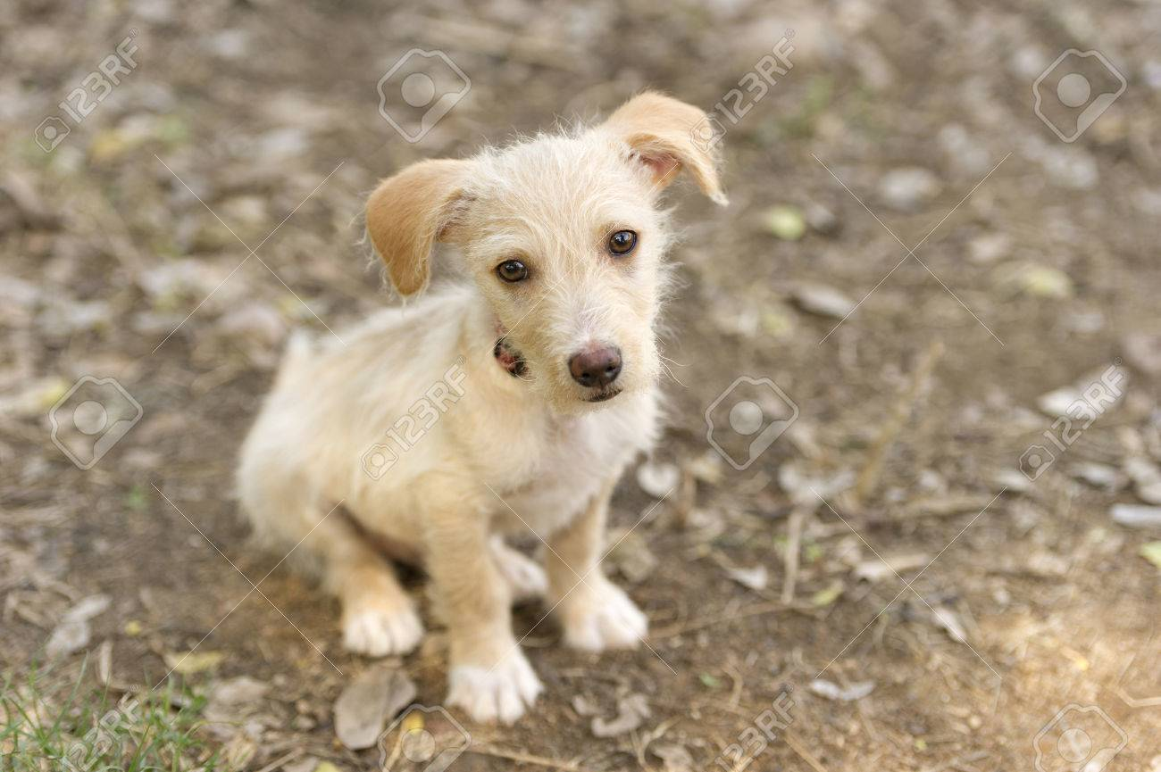 Download Baby Brown Adorable Dog - 48582588-cute-dog-is-a-very-cute-puppy-dog-who-is-as-adorable-as-a-baby-animal-can-be-  2018_81570  .jpg