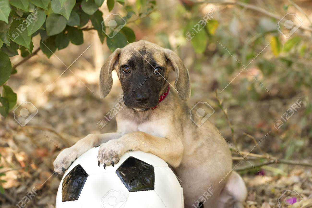 Top Floppy Ears Brown Adorable Dog - 50436675-cute-puppy-is-a-big-eyed-adorable-puppy-with-floppy-ears-looking-curious-while-resting-on-a-ball-out  Collection_709623  .jpg