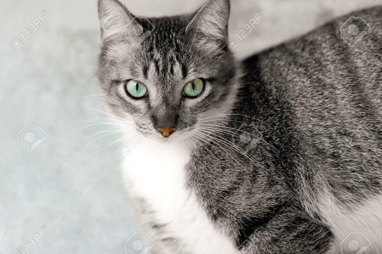 Katzenaugen ist eine schöne Tabby Katze mit einem gesunden Orange Nase und  schönen tiefen grünen Augen.