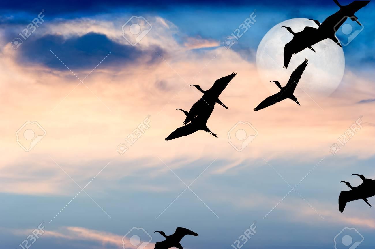 una foto di un uccello