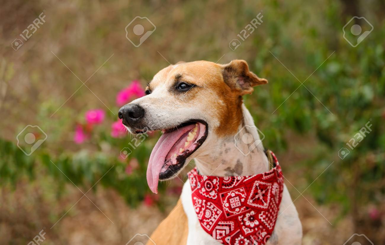 Happy Dog Is A Cute Tired Happy Dog Panting With His Mouth Open Stock Photo Picture And Royalty Free Image Image 87875241