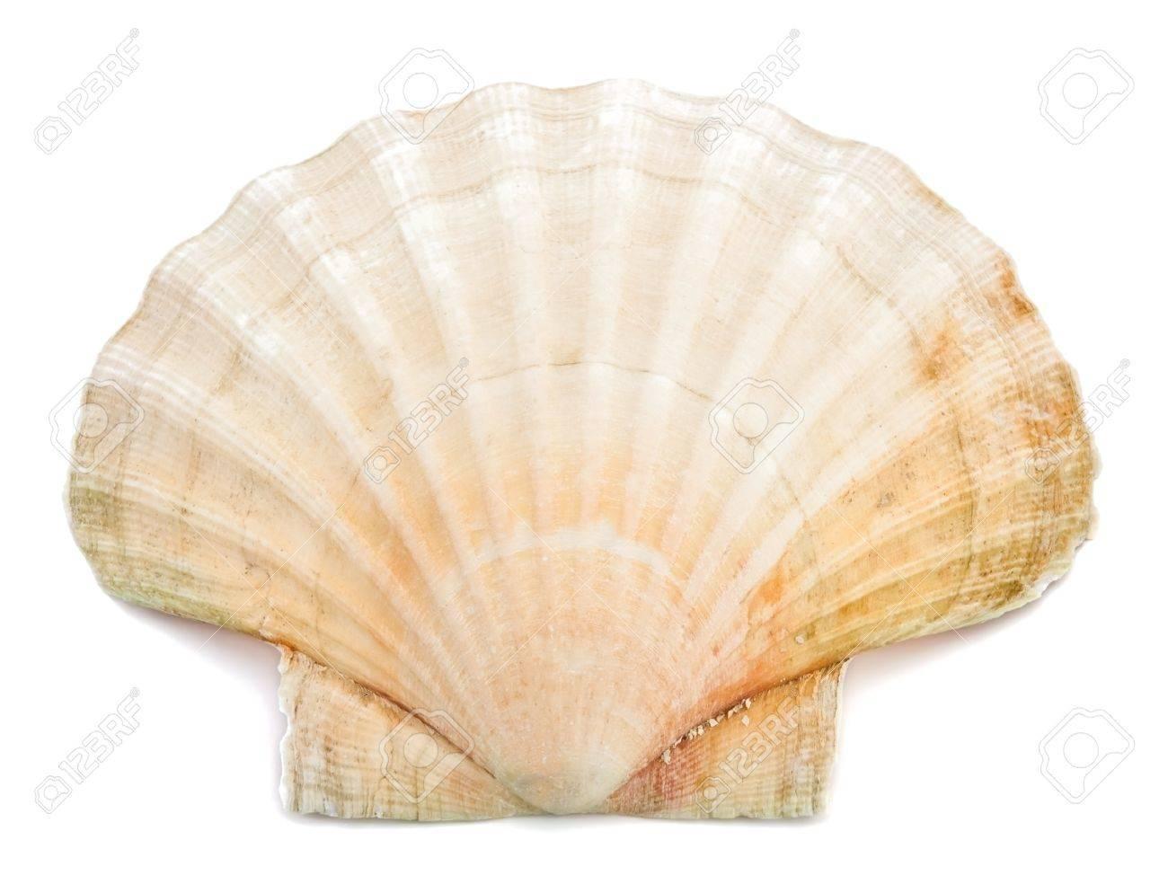 White sea shell on white background Stock Photo - 11188403