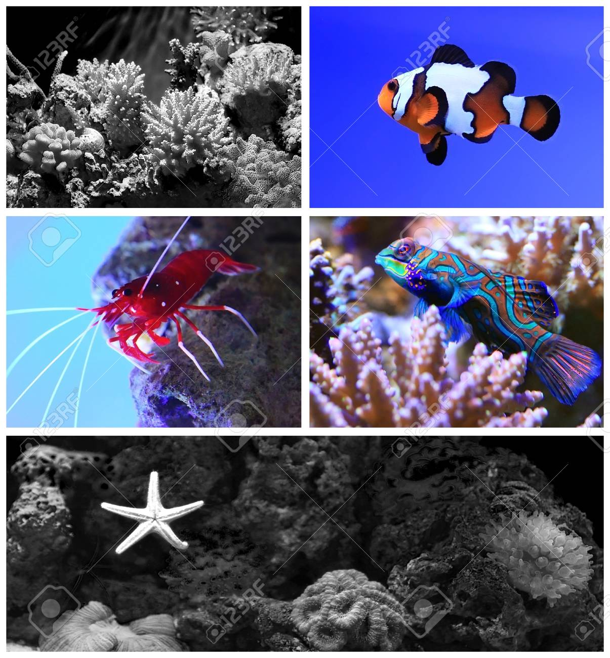 Tropical aquarium with coral reef and fish Stock Photo - 14039829