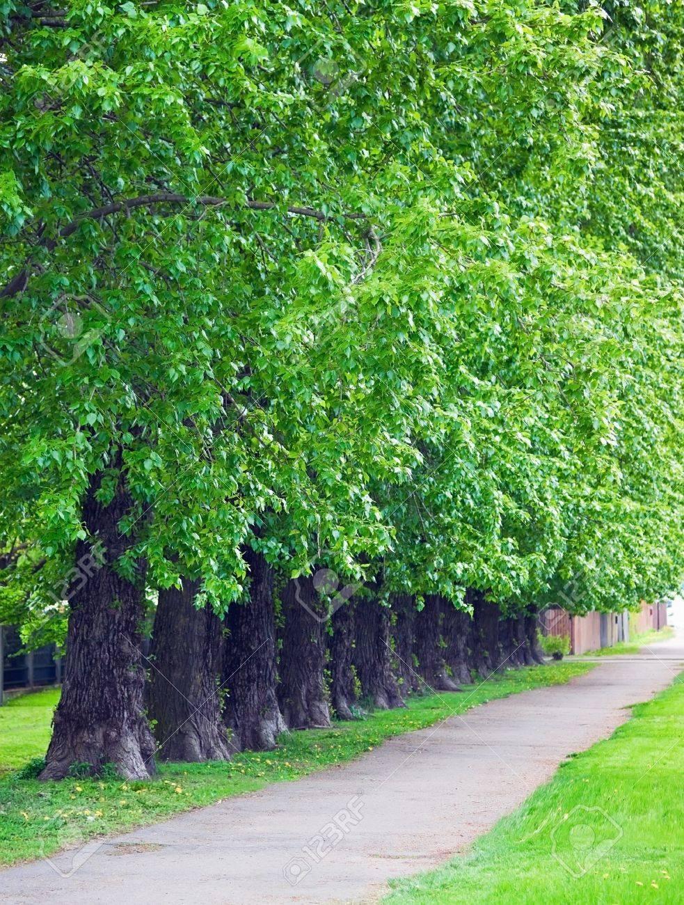 Row of trees in park Stock Photo - 14352145