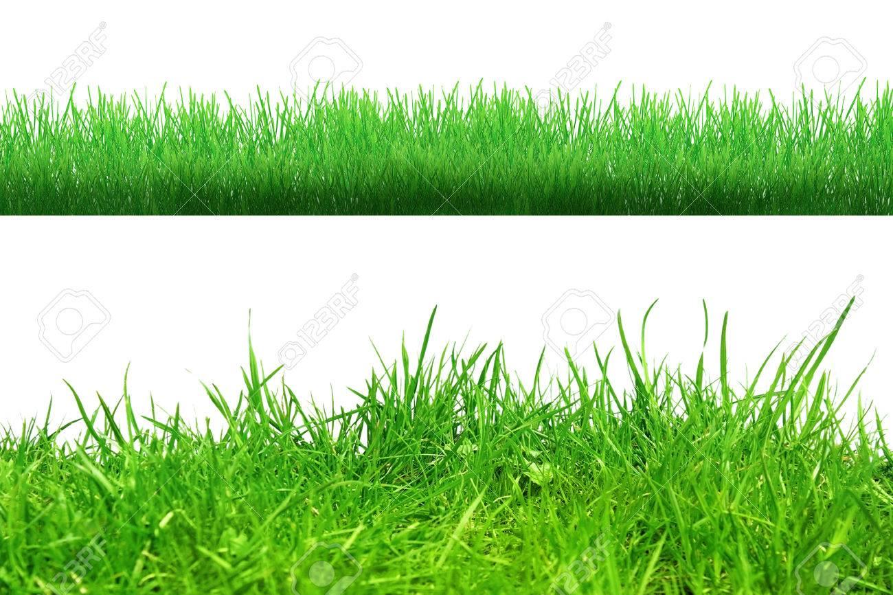 Herbe dans le sol isolé sur whiteAbstract nature bokeh