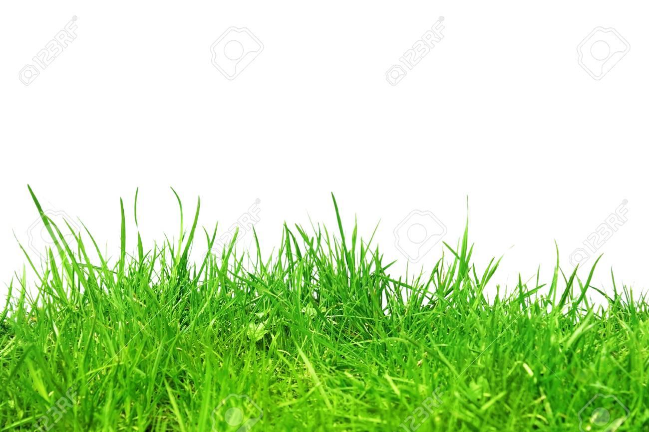 Herbe dans le sol isolé sur blancAbstract nature bokeh