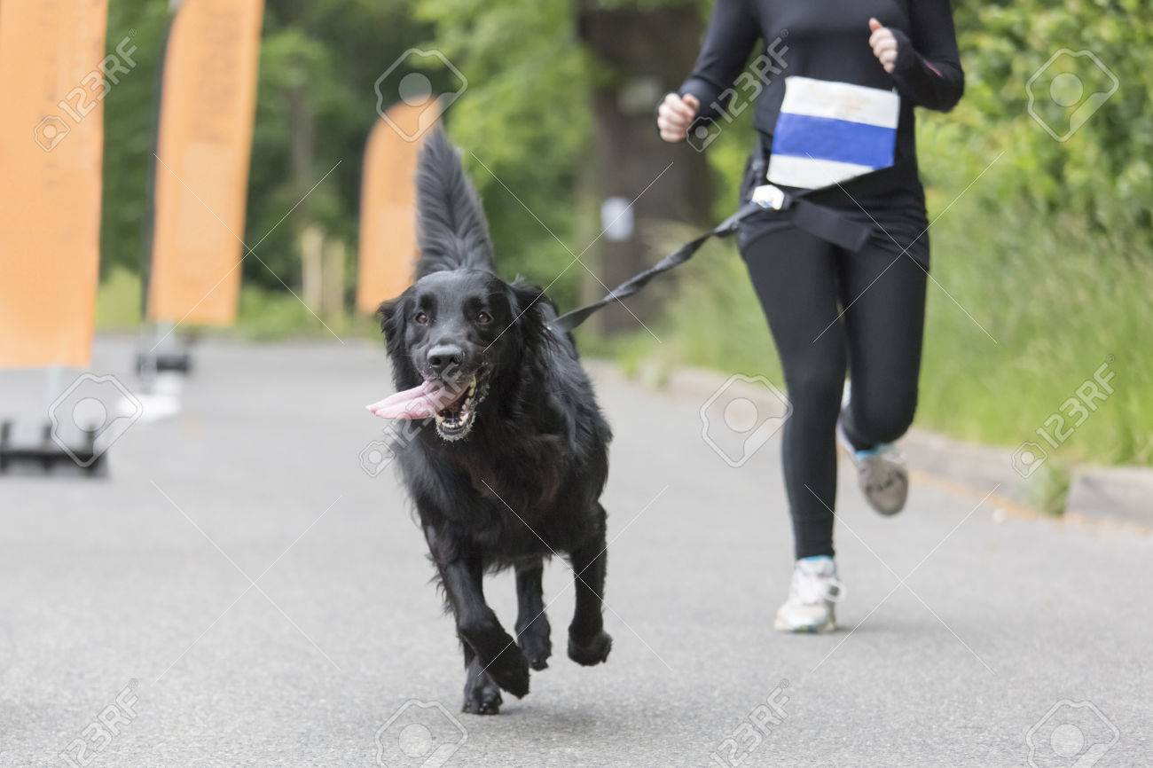 Dog and his owner are running together at a running event - 29300731