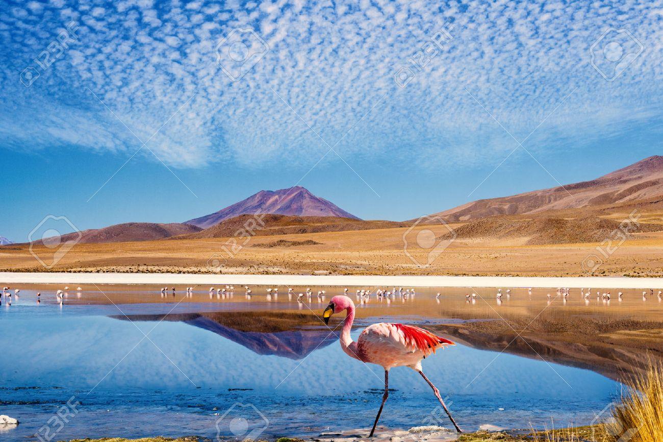 "Laguna at the ""Ruta de las Joyas altoandinas"" in Bolivia with pink flamingo walking through the scene - 34541507"
