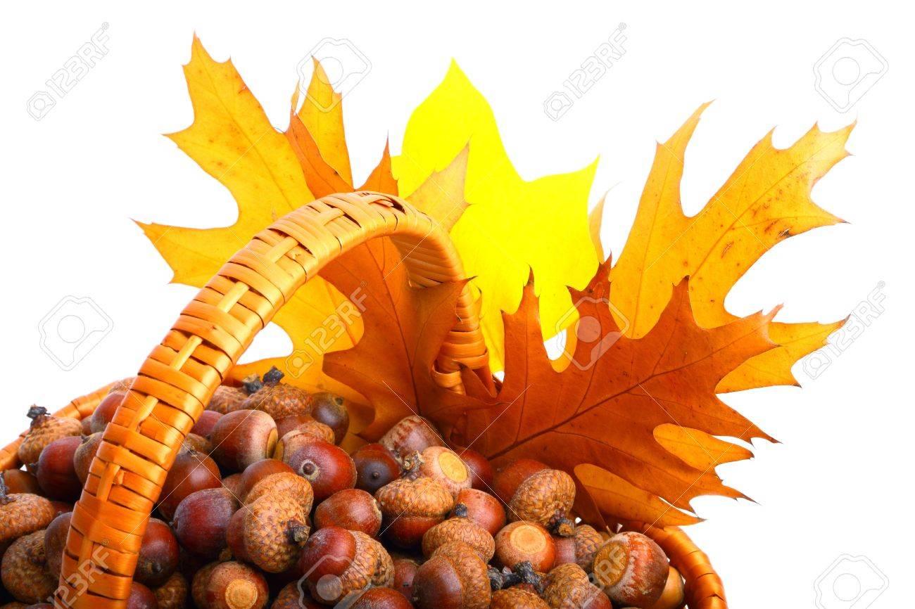 10841409-beautiful-basket-full-of-autumn