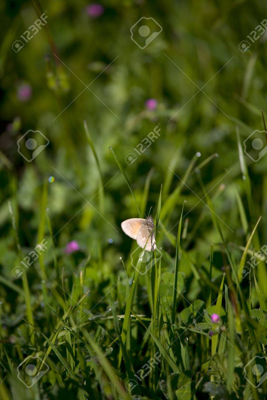 White moth in grass with dew drops and tiny pink flowers stock white moth in grass with dew drops and tiny pink flowers stock photo 4544363 dhlflorist Image collections