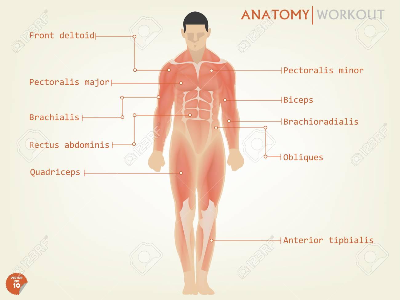 Ziemlich Menschliche Anatomie Und Physiologie Mckinley Fotos ...