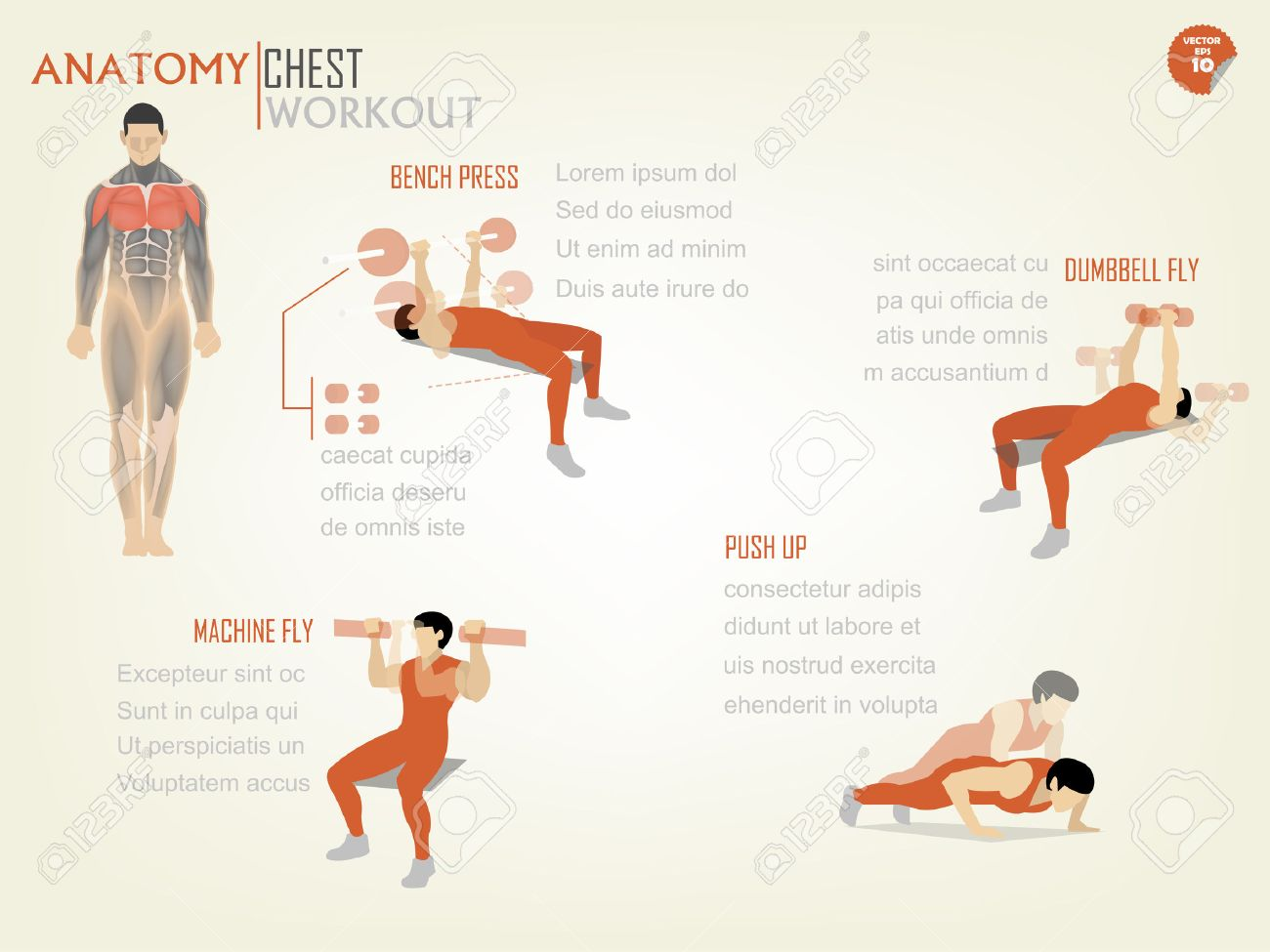 Wonderful Fly Bench Part - 7: Beautiful Design Infographic Of Chest Workout Consist Of Bench  Press,dumbbell Fly,machine Fly