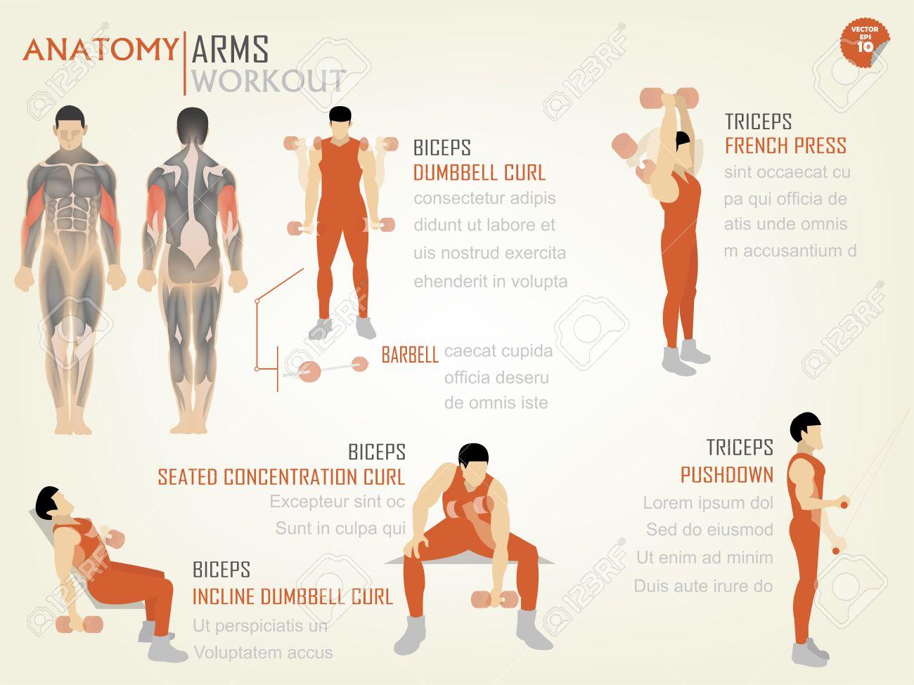 Hermosa Info Diseño Gráfico De Workoutbiceps Brazos Y Tríceps ...